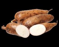 Quando os portugueses chegaram ao Brasil, não tinham trigo para fazer pão e, por isso, ficaram maravilhados com a mandioca. De tal forma, que mandaram logo construir uma fábrica para fazer farinha de mandioca.  Benéfica para a saúde e extremamente versátil, a mandioca tem inúmeras utilizações.